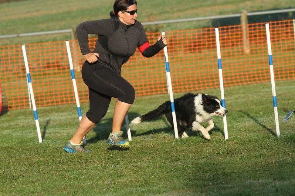 La meilleure méthode pour apprendre le slalom à son chien