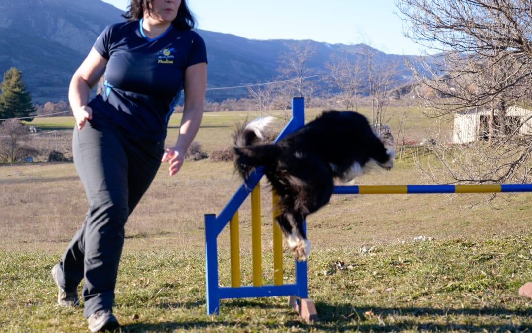 Apprendre à tourner court à son chien sur un parcours d'agility