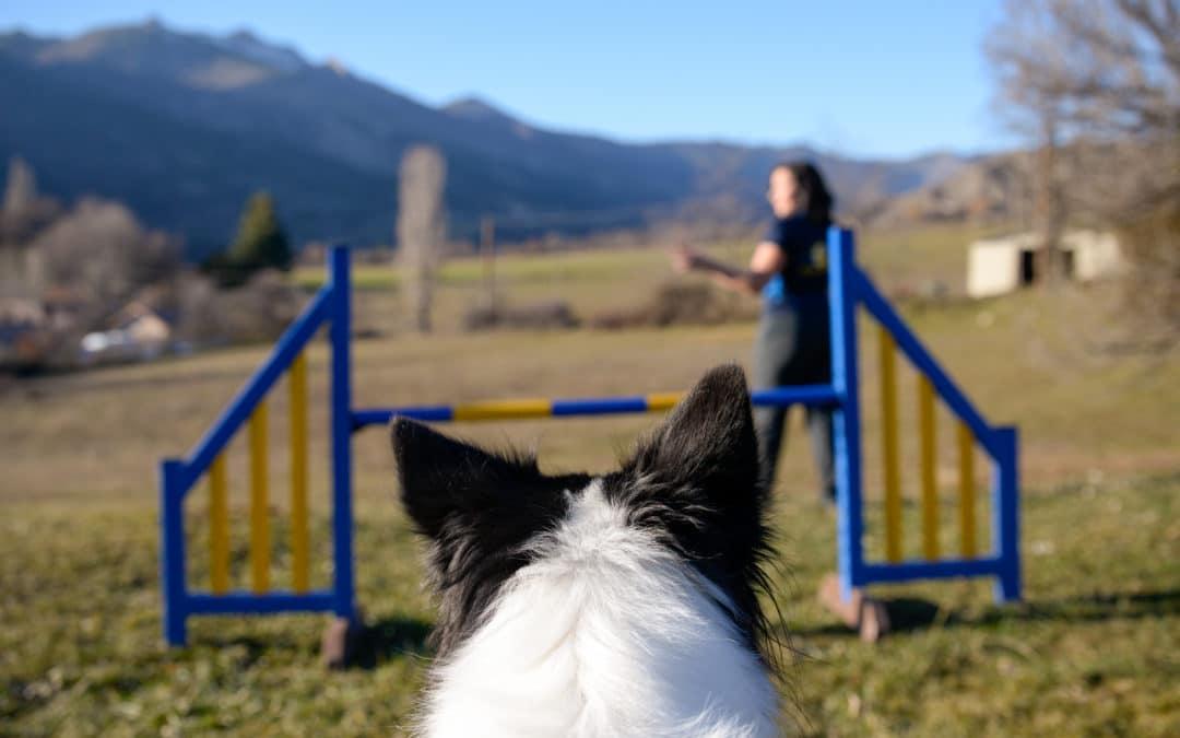 Avoir un chien qui tient les départs en agility